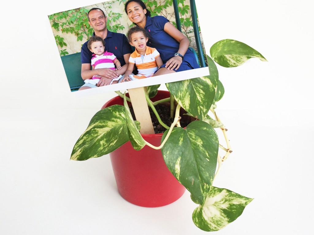 Planta decorada