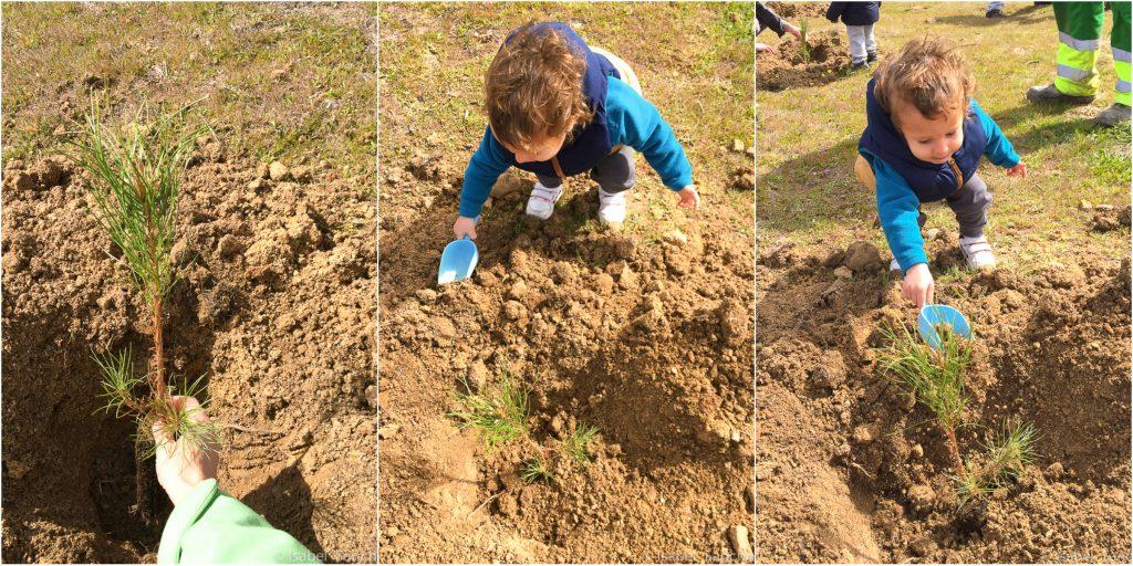 plantando-un-arbol